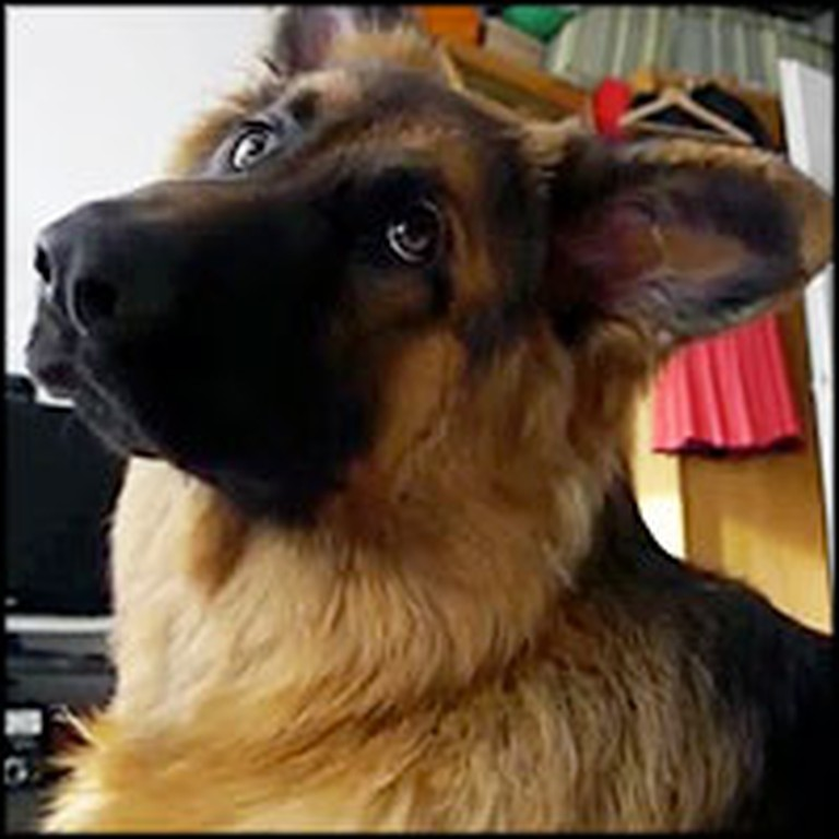 Adorable Dog Gives the Cutest Head Tilt Ever