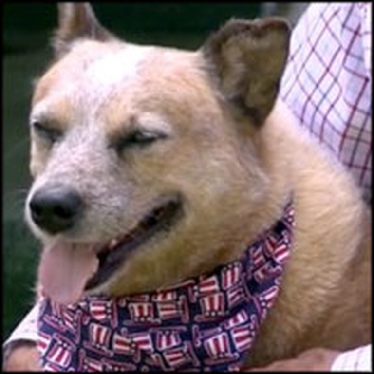 Farm Dog Saves Elderly Owner From Vicious Mauling