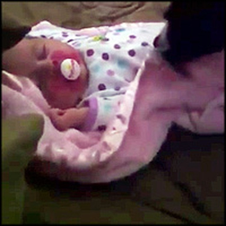 Sweet Dog Gently Tucks In a Sleeping Baby