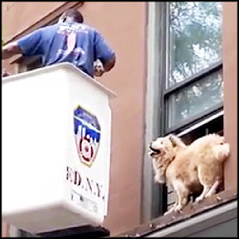 Dog Stranded on Window Ledge Gets Unbelievable Rescue from Heroic Firefighter