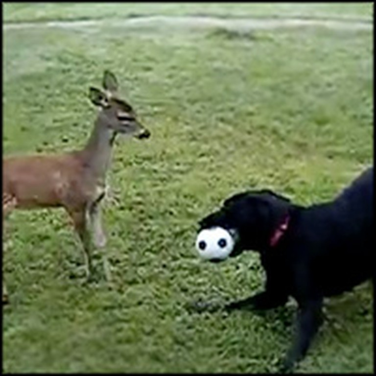 Dog and Baby Deer Play With a Ball - Adorable Best Friends