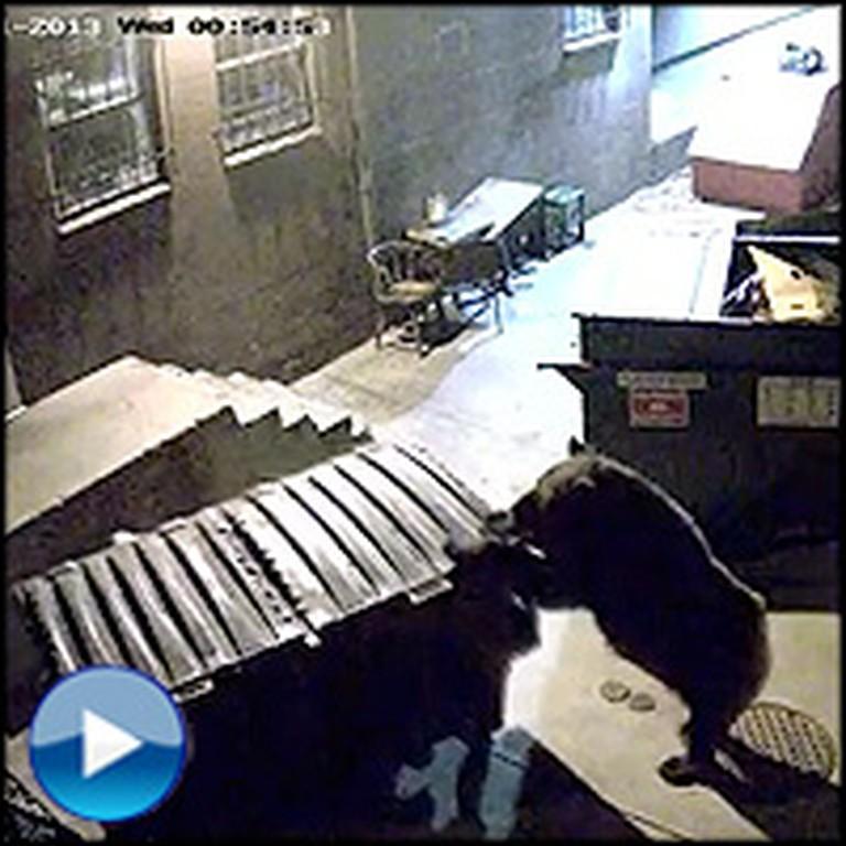 Smart Bear Gets Hungry, So She Swipes a Dumpster