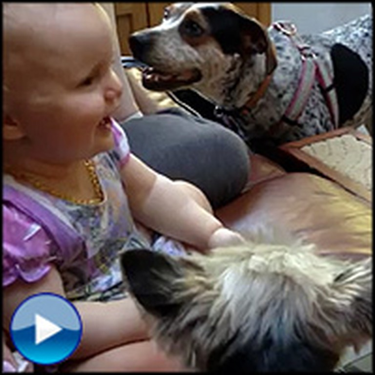 Darling Little Girl Has the Cutest Reaction to an Animal Video