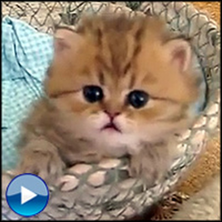 One of God's Cutest Creatures Will Make Your Day