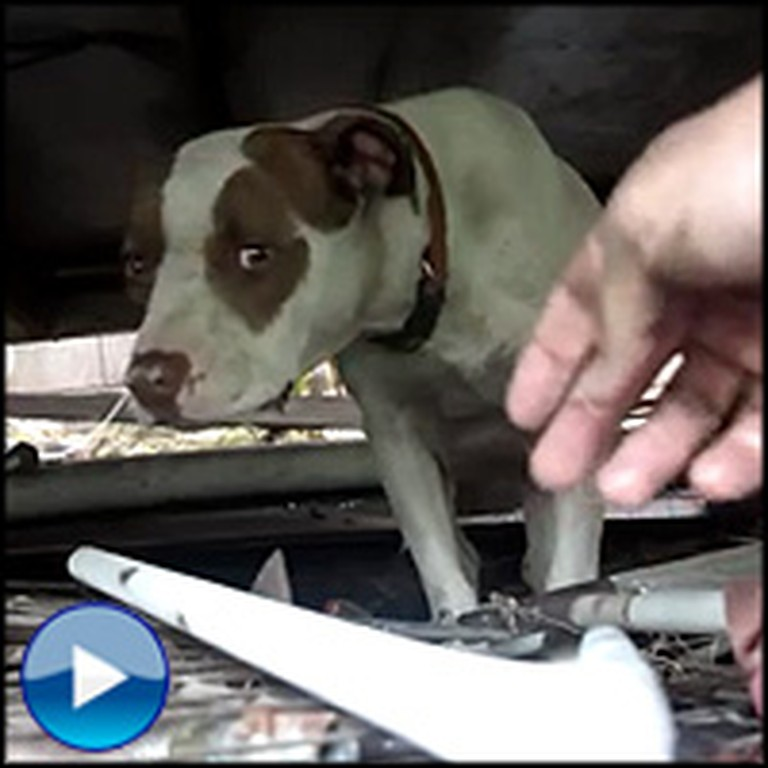Pregnant Dog & Her Unborn Puppies are Saved From Certain Death