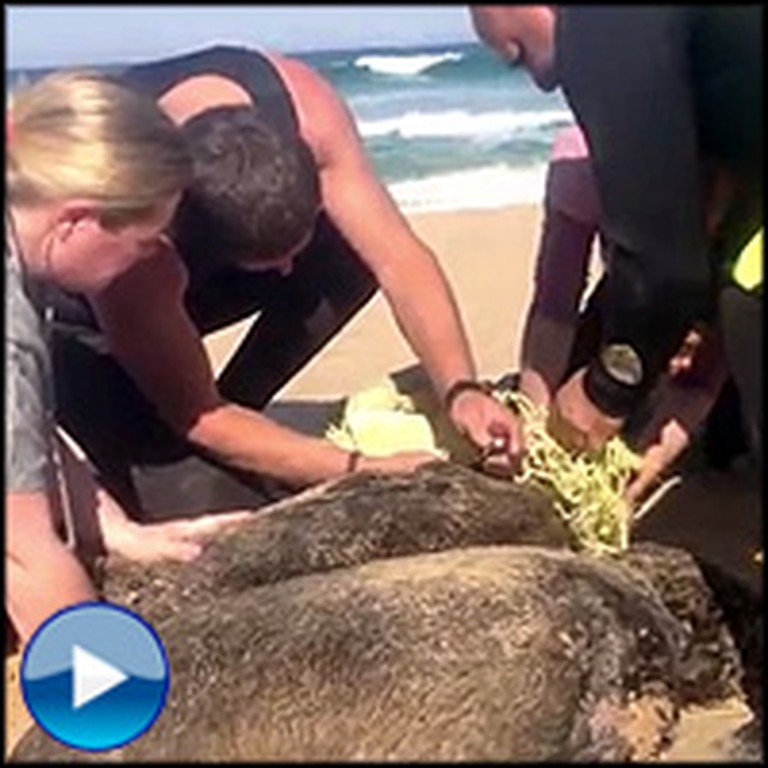Tourists Rescue a Suffocating Seal Found Trapped in Nets