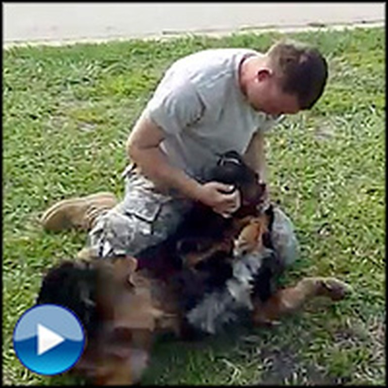 Huge Dog Turns Into a Puppy When Reunited With Owner