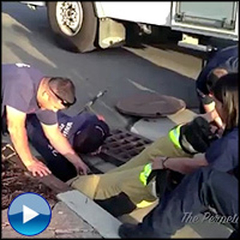 Firefighters Save Adorable Animal Family From the Sewer