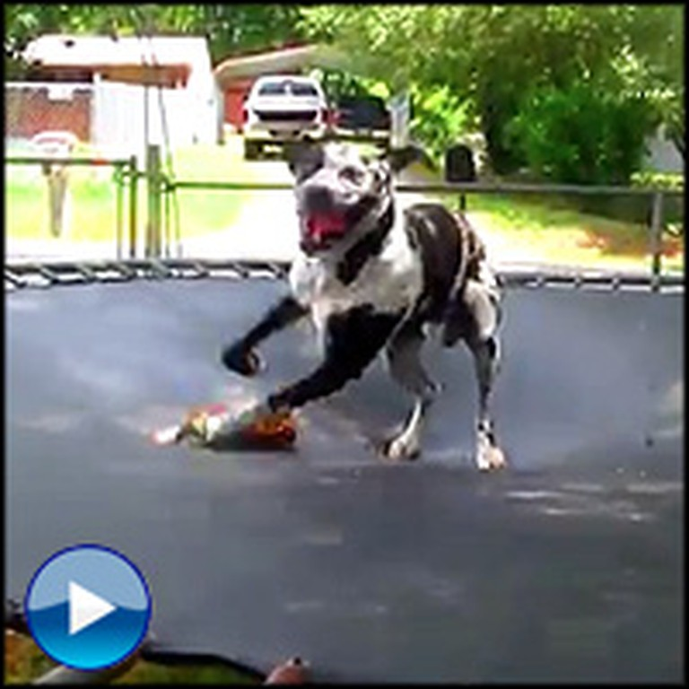 Something Awesome Happens When Animals Use a Trampoline
