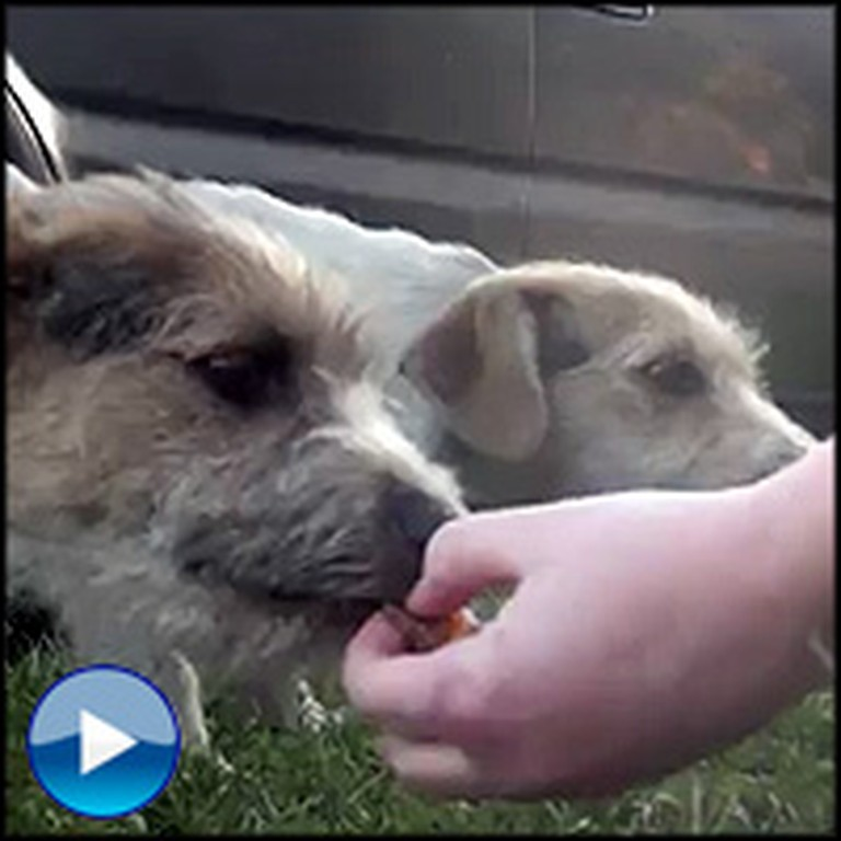 An Abandoned Dog Family Gets Saved From a Terrible Life on the Streets