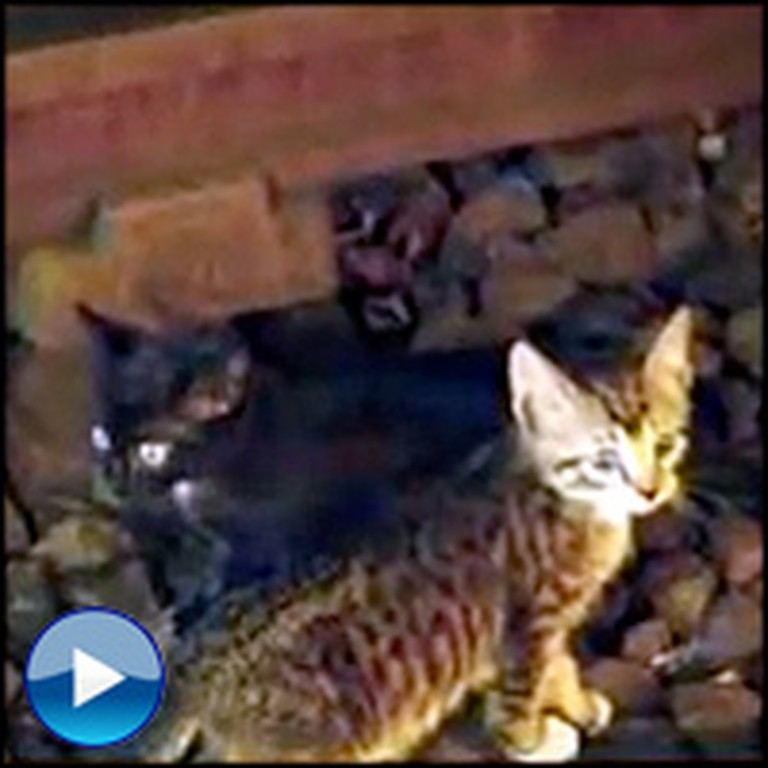 Two Kittens Do the Unthinkable and Stop Subway Service in NYC