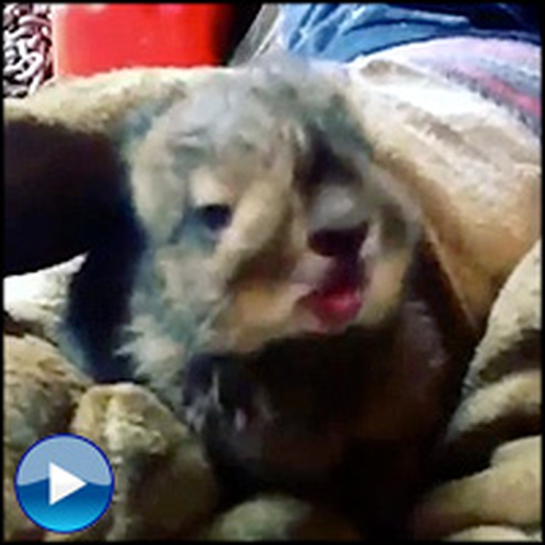 A Rescued Baby Bunny Has an Adorable Sneeze Attack - So Cute