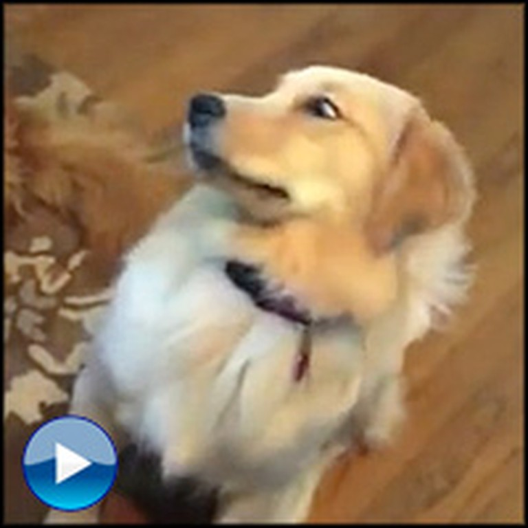 Hilarious Dog Forgets How to Play Catch - LOL