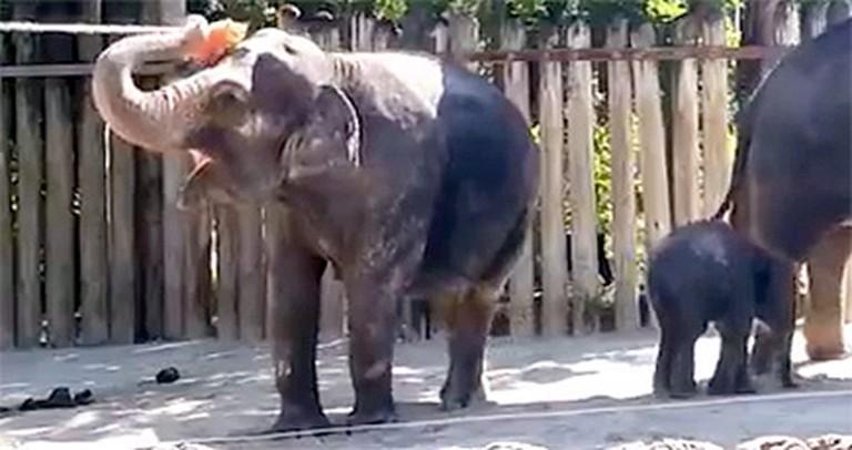 Helpful Elephant Gives Herself a Bath - LOL, So Cute!