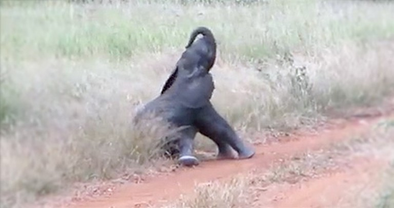 Sweet Baby Elephant Discovers His Trunk and Feet for the First Time