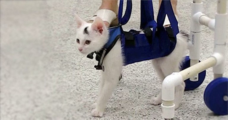A Kitten Shocks Vets by Overcoming a Crippling Disorder - a Fluffy Miracle!