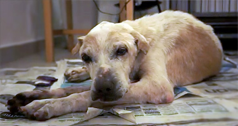 Lonely Old Dog Has His Dying Wish Come True - To Be Loved ♥