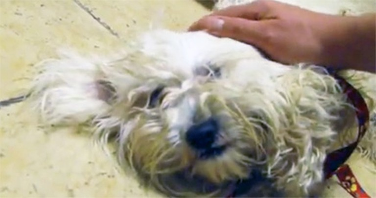 Meet the Scared Dog That Only Wanted a Hug