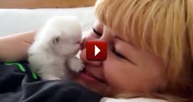 A Fuzzy Little Kitten Gives Her Owner Sweet Kisses