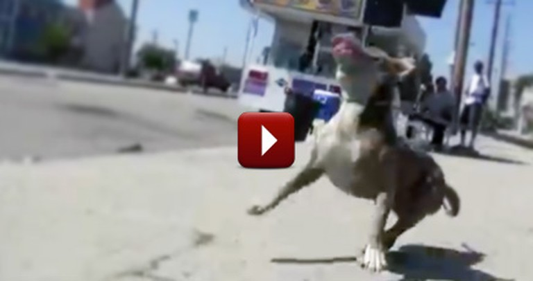 A Dangerous Dog Rescue Has the Happiest Ending You Could Ever Imagine