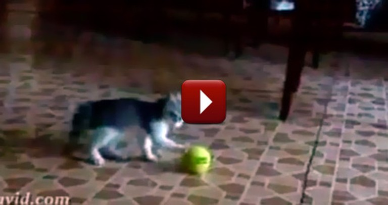 You Thought You Knew What Cute Was, But Just Watch This Hilarious Kitten Video