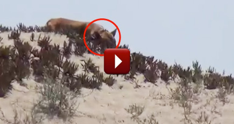 Amazing People Save a Lonely, Abandoned Pitbull Living on a Beach