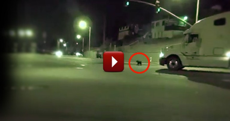 Frightened Dog on an Extremely Dangerous Road Gets the Rescue it Desperately Needed