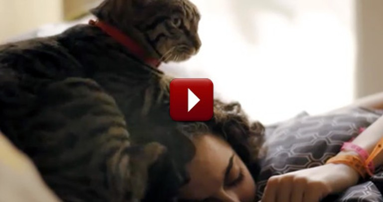 You Probably Don't Realize Just How Much Your Kitty Helps You. Just Watch!