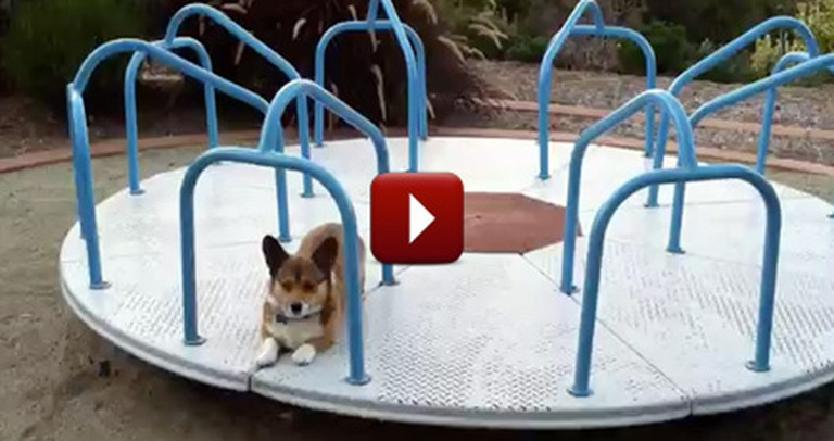 What The World's Happiest Dog Does for Fun is So Silly