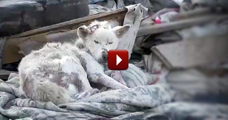 A Dying Dog in a Trash Pile is Found - Watch the Tear-Jerking Ending