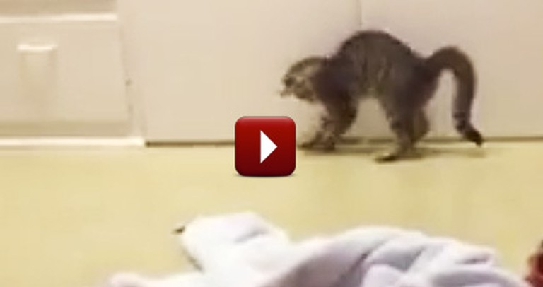 Hilarious Kitten Discovers His Own Shadow and Does the Funniest Thing