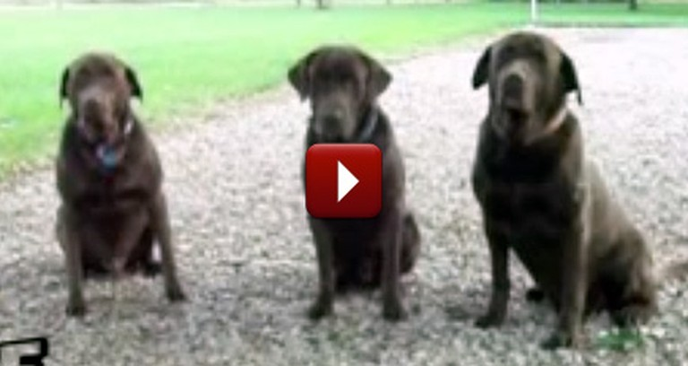Patient Puppies Say Grace Before Their Meal - So Funny