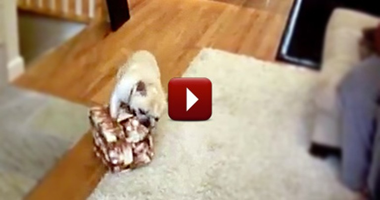 This is Proof Dogs Love Opening Christmas Gifts, Too!