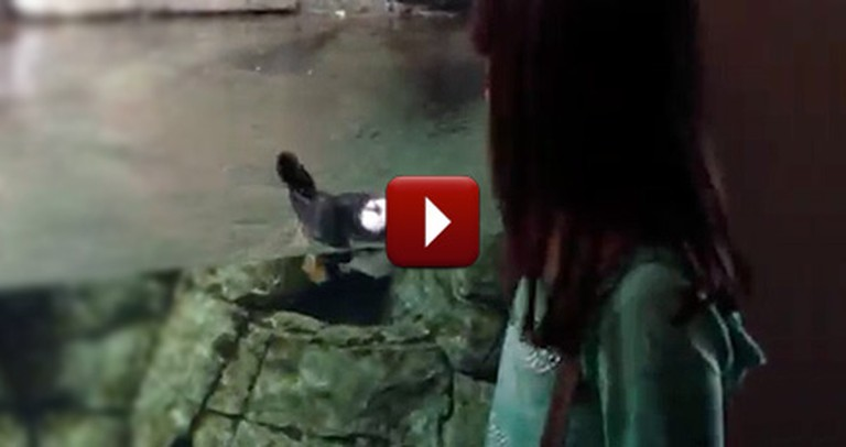 Adorable Puffin Befriends a Little Girl at the Zoo