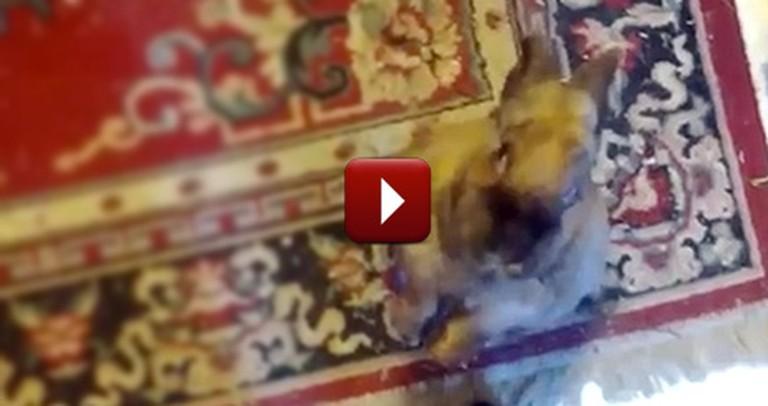 Man Has a Conversation With His Pet Rabbit