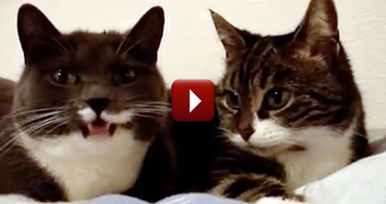 Two Talking Cats Have World's Most Adorable Conversation