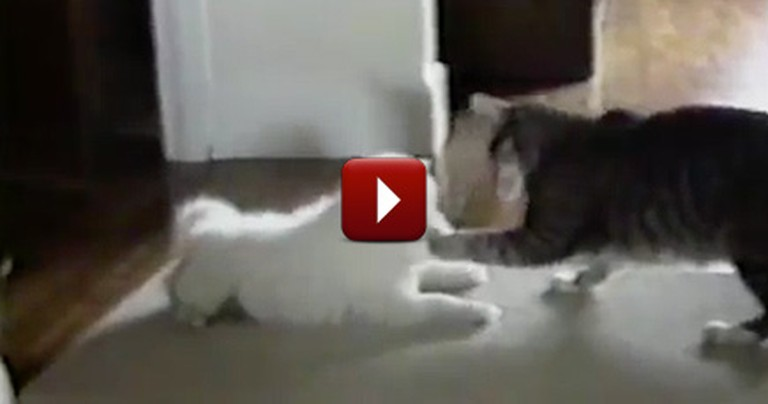 Genius Kitty Teaches His Puppy Friend How to Get Treats