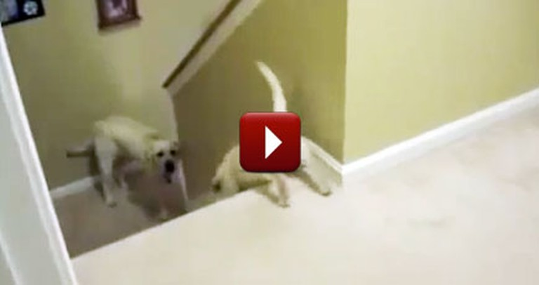 This is the Hilarious Difference Between Dogs and Cats
