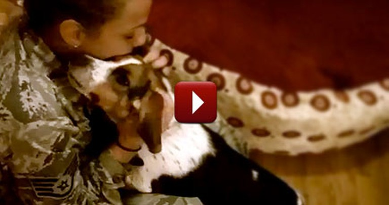 Beagle Cries When Mommy Comes Home From Overseas