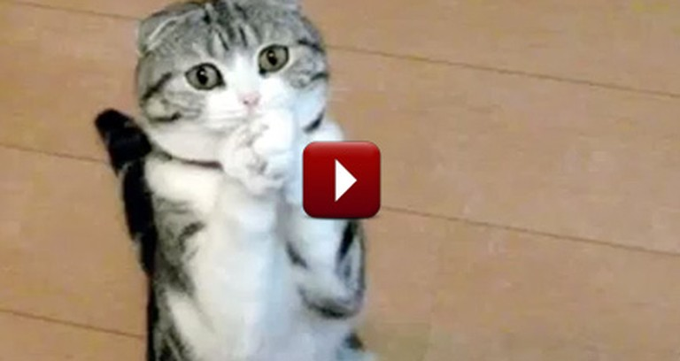 Cutest Animals Beg for Treats - Could You Say No to These Faces?