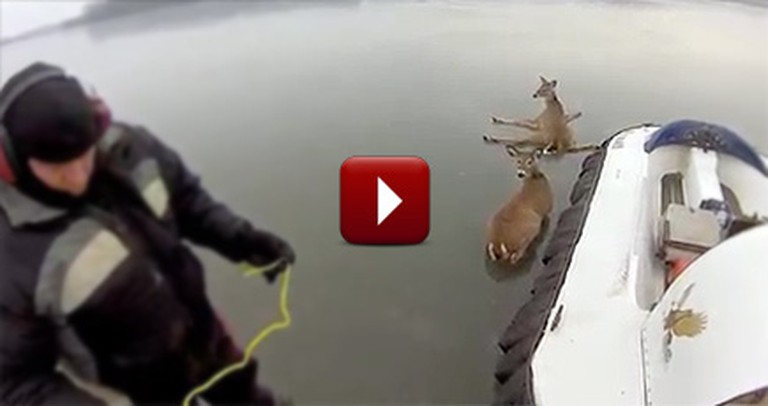 Two Heroes Rescue Deer That Were Stranded on an Icy Lake