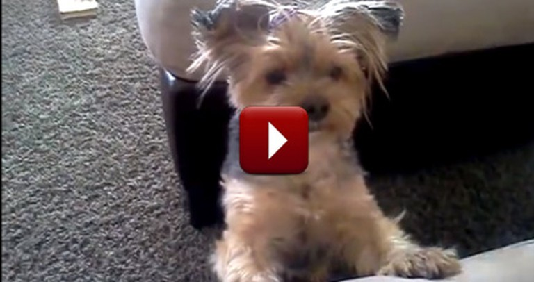Adorable Dog Will Melt Your Heart As She Says Her Prayers