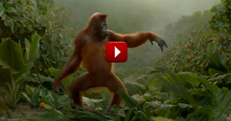 Funny Orangutan Will Brighten Your Day