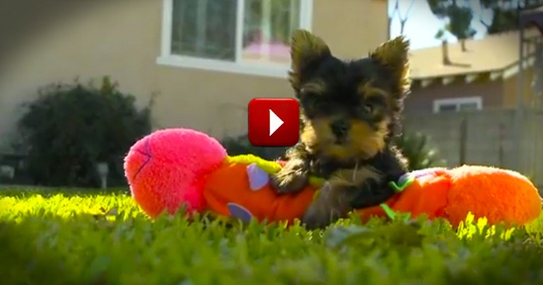 This is the Happiest Dog Video You'll Ever Watch