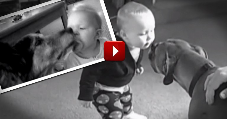 Babies and Puppies Kiss for the First Time -- And It's Completely Adorable!
