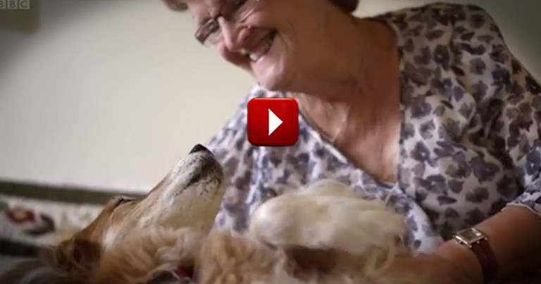 This Dog is Smarter Than Doctors!  You'll Be Amazed by What He Knows
