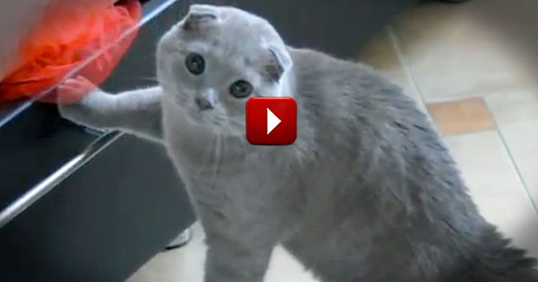 Extremely Guilty Kitty Gets Caught Snooping - What a Reaction!