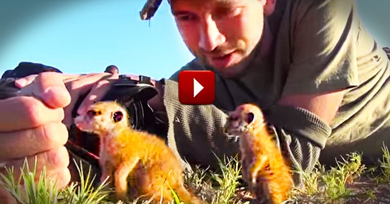 This Man Gets Paid to Snuggle Adorable Meerkats. My Jealousy Started at 46 Seconds.