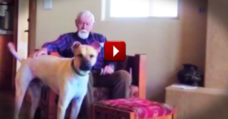 This Man Talking To A Dog May Not Seem Special. Until You Hear His Story.  So Many Tears!