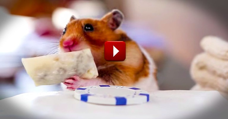 I Just Can't Stop Watching!  This Small Creature's Tiny Meal is a Huge Cuteness Overload.